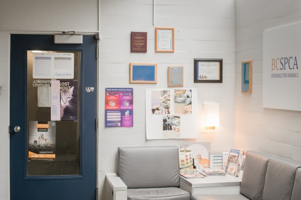 Feel free to take a seat in our waiting room while you wait for your pet's appointment.